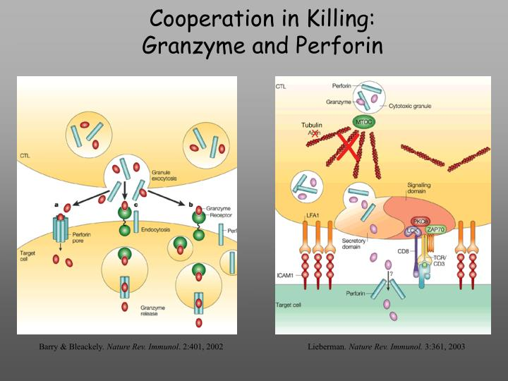 Cooperation in Killing: