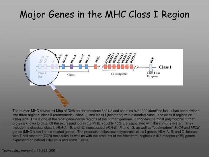 Major Genes in the MHC Class I Region