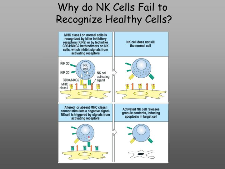 Why do NK Cells Fail to