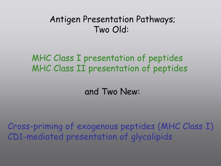 Antigen Presentation Pathways;
