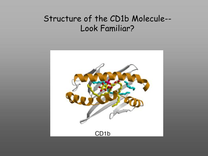 Structure of the CD1b Molecule--