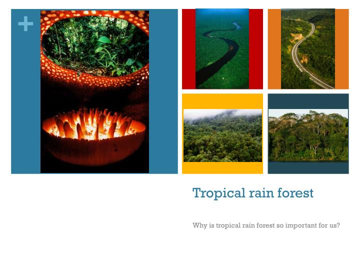 importance of tropical rainforests environmental sciences essay Agriculture & forestry careers environmental policy agriculture & forestry careers though an academic degree in agricultural or animal sciences is.