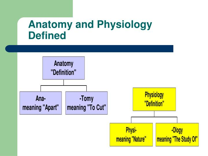 anatomy and physiology defined n.