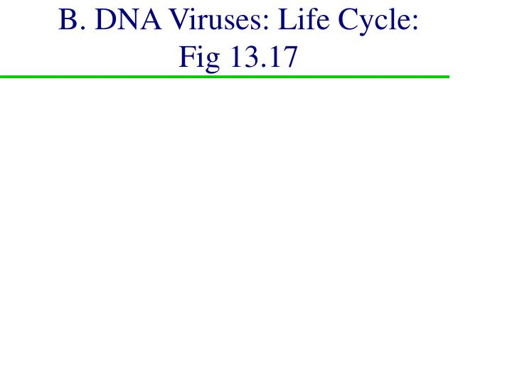 B. DNA Viruses: Life Cycle: