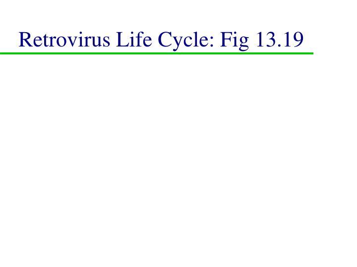 Retrovirus Life Cycle: Fig 13.19
