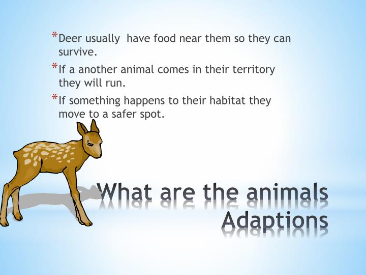 Deer usually  have food near them so they can survive.