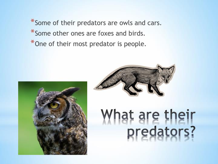 Some of their predators are owls and cars.