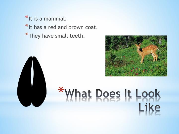 What does it look like