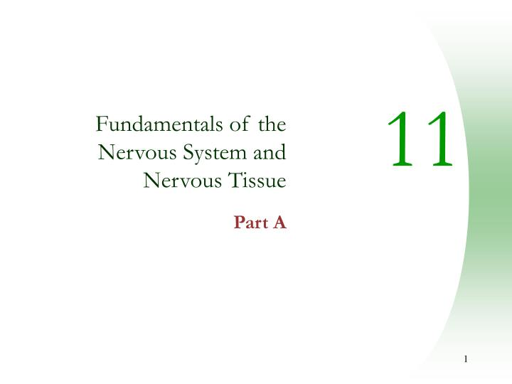 fundamentals of the nervous system and nervous tissue part a n.
