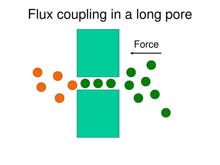 Flux coupling in a long pore