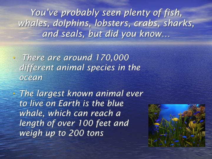 You've probably seen plenty of fish, whales, dolphins, lobsters, crabs, sharks, and seals, but did you know…