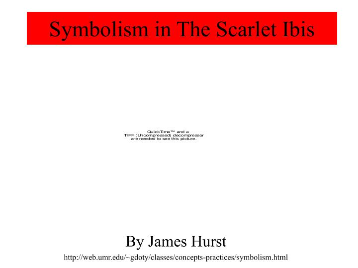 Ppt Symbolism In The Scarlet Ibis Powerpoint Presentation Id1721225