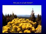 are you in a lush forest