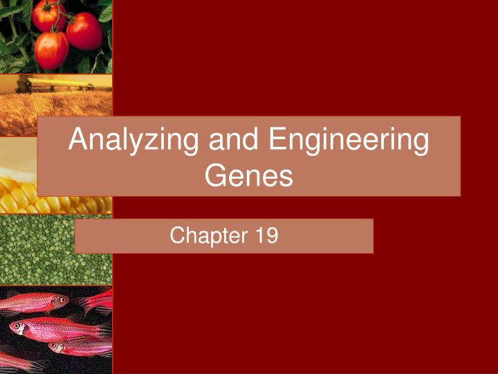 an analysis of the use of genetic engineering by individual americans Genetic engineering is the deliberate modification of an organism through the alteration of its genetic code by removing sections of an organism's dna and replacing them with new segments, geneticists can artificially select for certain traits (simmons.