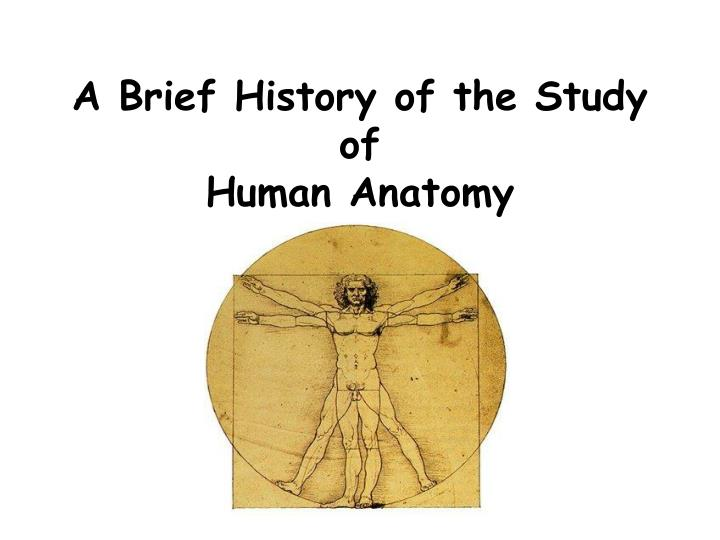 a brief history of the study of human anatomy n.