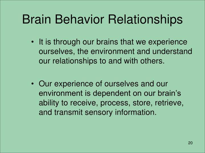 Brain Behavior Relationships