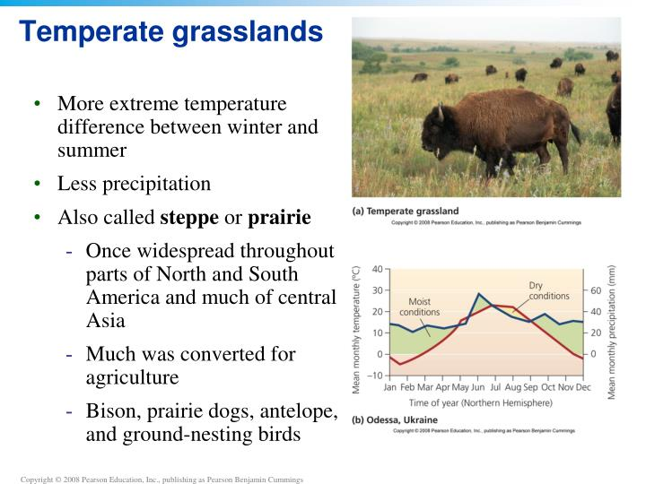 Temperate grasslands