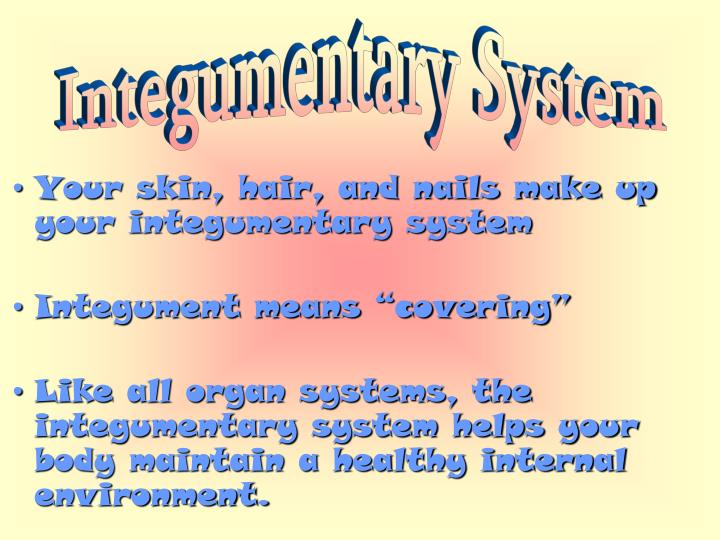 Ppt Your Skin Hair And Nails Make Up Your Integumentary System