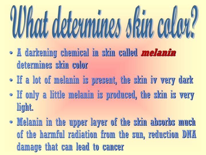What determines skin color?