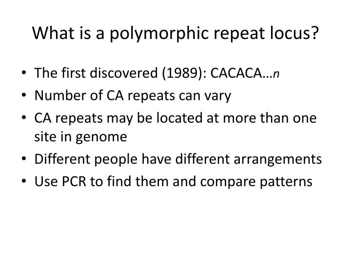 What is a polymorphic repeat locus?