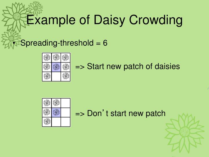 Example of Daisy Crowding