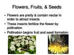 flowers fruits seeds