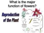 what is the major function of flowers