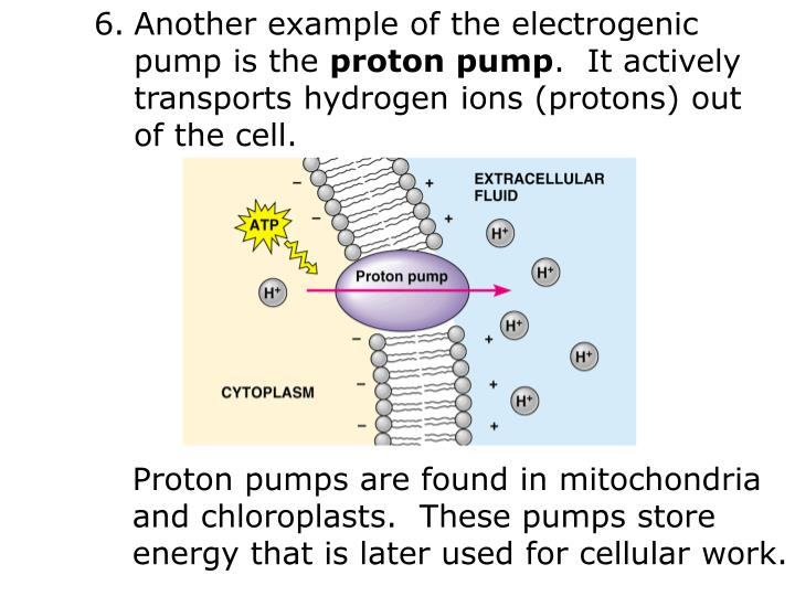 Another example of the electrogenic