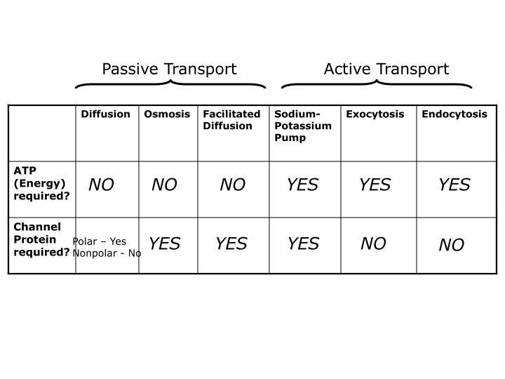 Passive Transport                Active Transport