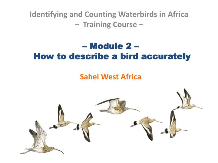 module 2 how to describe a bird accurately sahel west africa n.