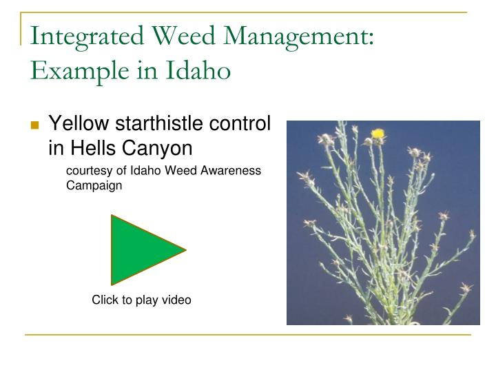 Integrated Weed Management: Example in Idaho