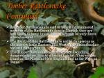 timber rattlesnake continued