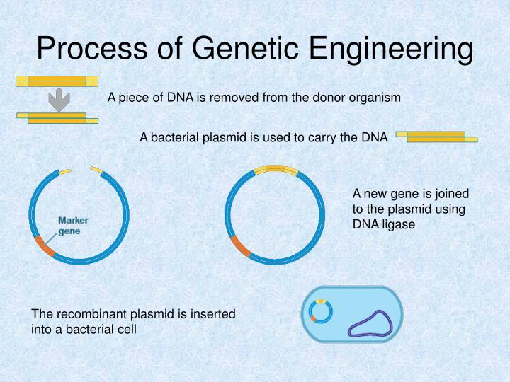 Process of Genetic Engineering