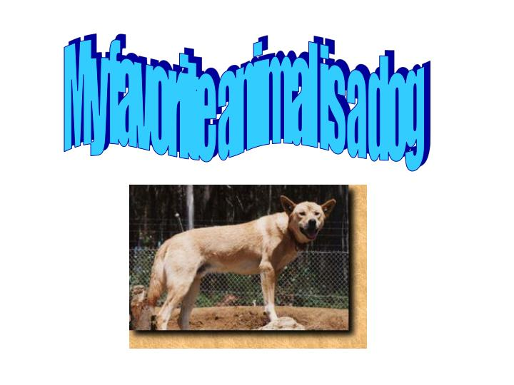 My favorite animal is a dog
