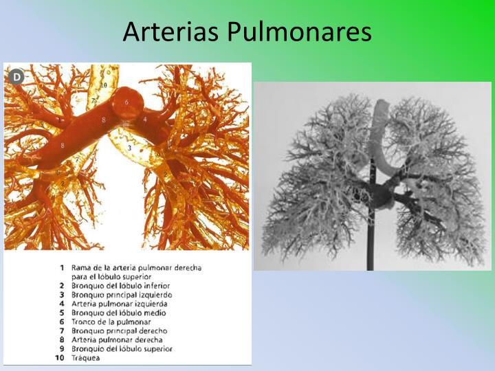 Arterias Pulmonares