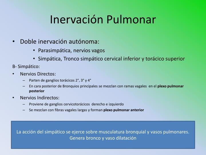 Inervación Pulmonar