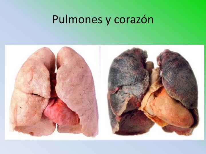 Pulmones y corazón