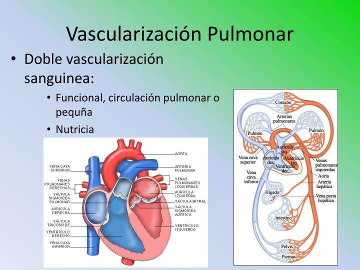 Vascularización Pulmonar