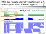 rna seq reveals alternative isoforms in a transcription factor linked to hypoxia