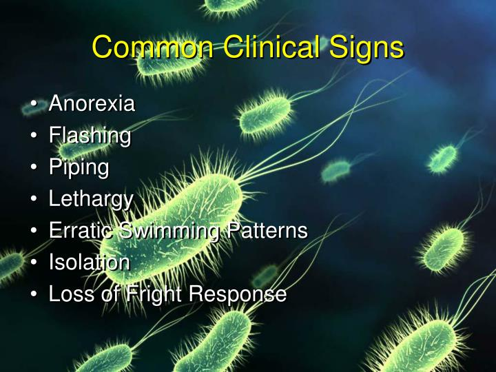 Common Clinical Signs