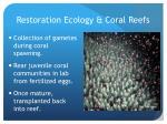 restoration ecology coral reefs2