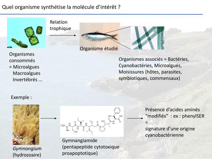 Quel organisme synthétise la molécule d'intérêt ?