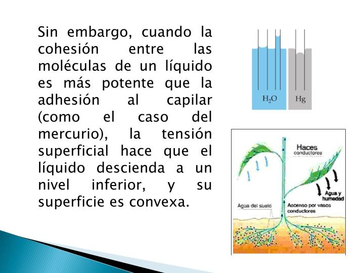 Sin embargo, cuando la cohesión entre las moléculas de un líquido es más potente que la adhesión al capilar (como el caso del mercurio), la tensión superficial hace que el líquido descienda a un nivel inferior, y su superficie es convexa.