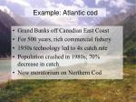 example atlantic cod