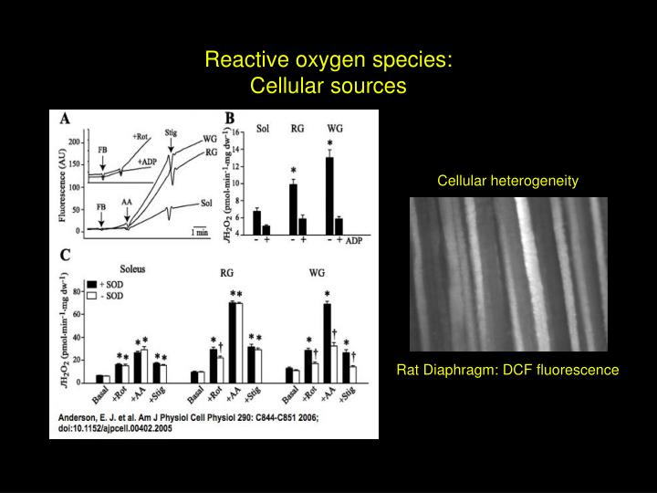 Reactive oxygen species: