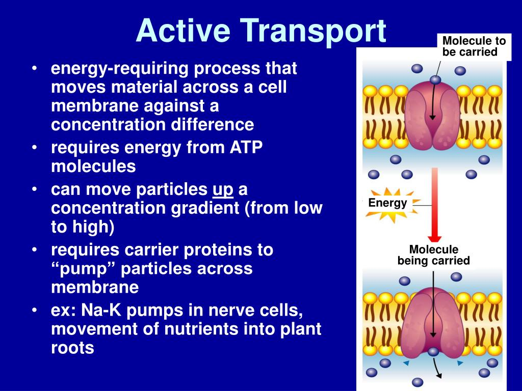 PPT - Biology 1- Chapter 7 Notes Prentice Hall (pg. 168 ...