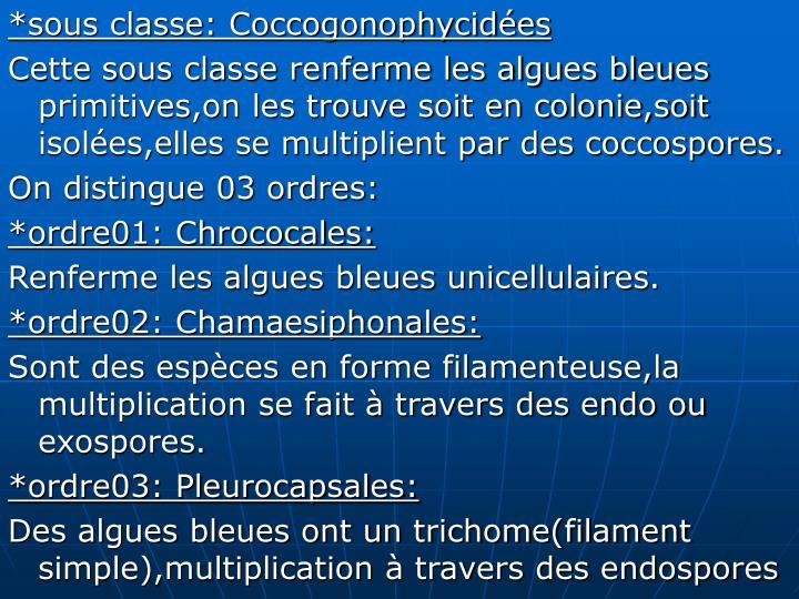 *sous classe: Coccogonophycidées