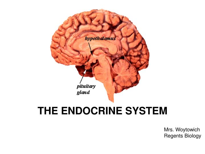 an introduction to an endocrine system a group of specialized organs that produce substances known a The endocrine system—the other communication system in the body—is made up of endocrine glands that produce hormones, chemical substances released into the bloodstream to guide processes such as metabolism, growth, and sexual development.