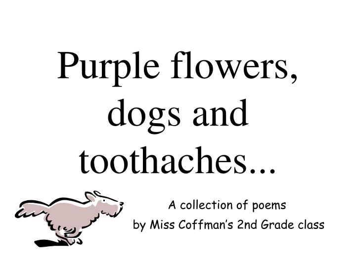 purple flowers dogs and toothaches n.