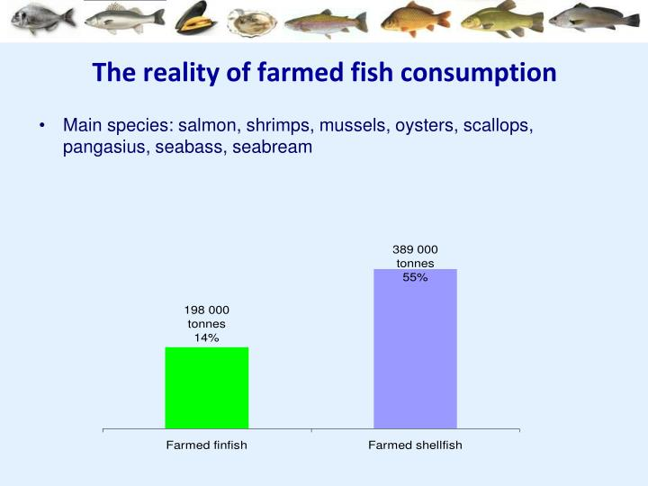 The reality of farmed fish consumption